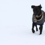Patterdale in snow - pet portraits Leamington Spa