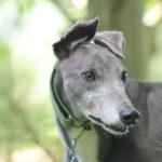 Pet portraits Leamington Spa
