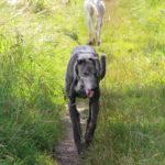 Lucas & Belle back to back - pet portraits Leamington Spa