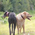 Lucas & Humphry - pet portraits