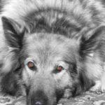 Pet portraits Leamington